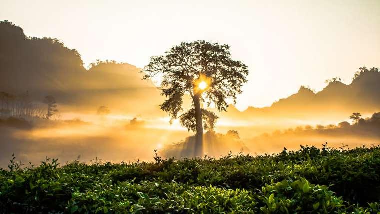 Láska stromu