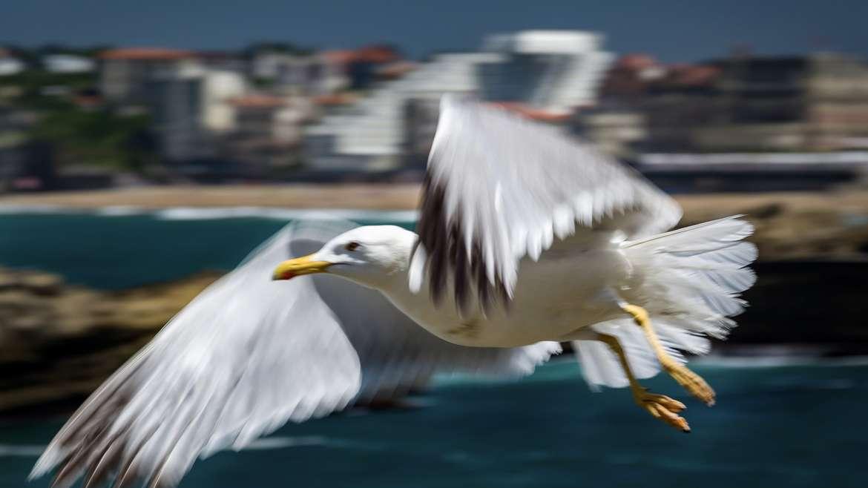 Je to nádhera, roztáhnout křídla a letět, že jo
